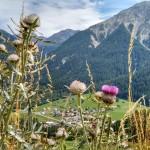 Schweizerisches Paradies für Digitale Nomaden